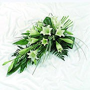 Longiflorum Lilies