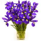 Simply Blue Iris