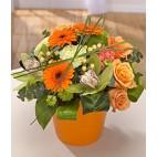 Tango Orange Arrangement In Pot