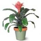 Exotic Bromeliad Treasure