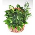 Garden Planter Basket