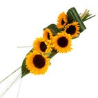 Sunflowers By The Stem
