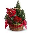 Conifer Basket