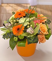 Tango Orange Arrangement In Pot