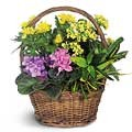 Scented Seasonal Basket