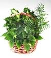 Garden Planter Basket